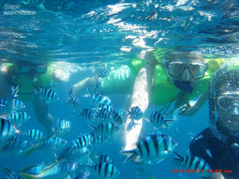 Bahul Island Coron Swimming with Fishes