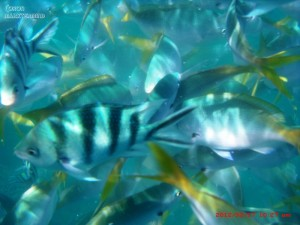 Swimming close with fishes, an awesome underwater experience.