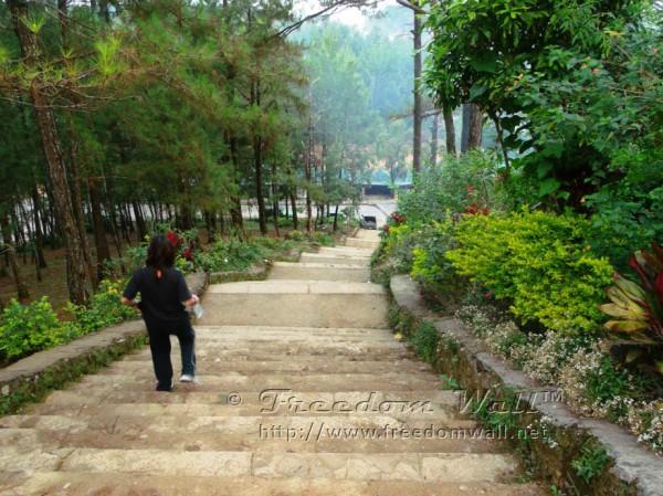 Wright Park Stairway