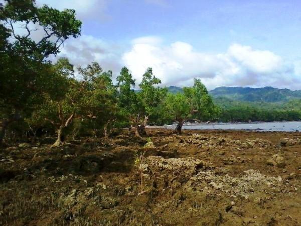 bonawon mangrove area