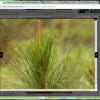 jQuery Colorbox: The Best Image Zooming Plugin for WordPress Blogs
