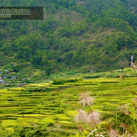sagada rice granery