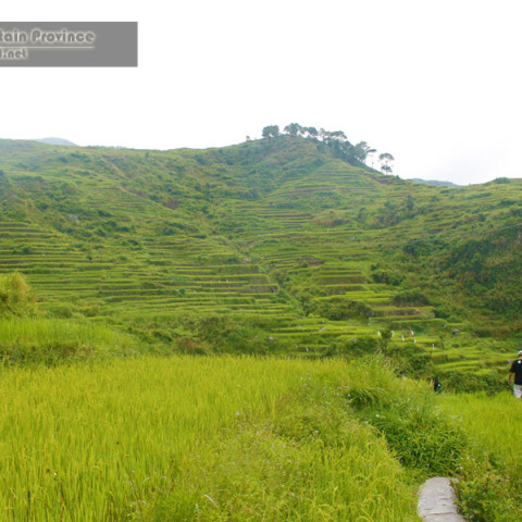 Northern Sagada Rice Terraces