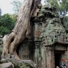 The Sprawling Roots of Ta Prohm