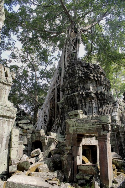 Roots sprawling in Ta Prohm