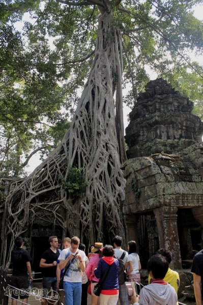 Roots of Stranger Fig growing at Ta Prohm