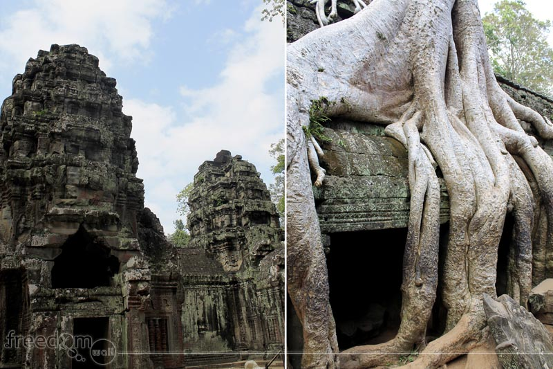 Ta Prohm crowns (left) and thitpok tree roots (left)