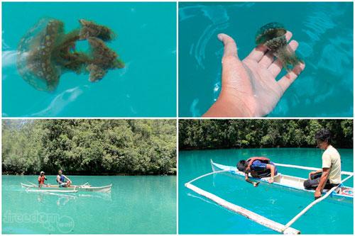 Spotting some jelly fishes at Tojoman Lagoon or Sohoton Jellyfish Sanctuary