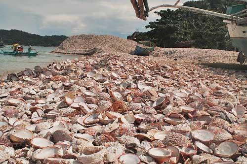 The shore in Barangay Asluma is covered with mountains of scallop shells