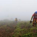 A Foggy Ascent at Pico De Loro's Summit