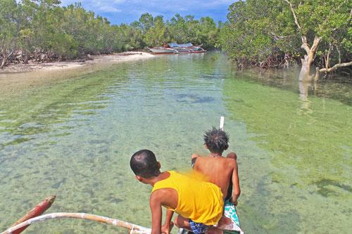 Alibijaban mangrove forest