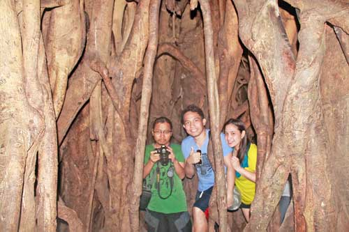 One of Asia's Oldest Balete (Banyan) Tree