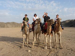 camel egypt