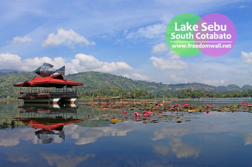 The lotuses are in full bloom in the unsurprisingly calm Lake Sebu