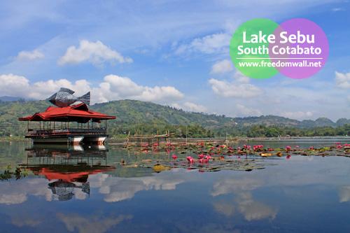 The lotuses are in full bloom in the unsurprisingly calm Lake Sebu