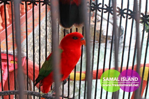 captain hook's red parrot