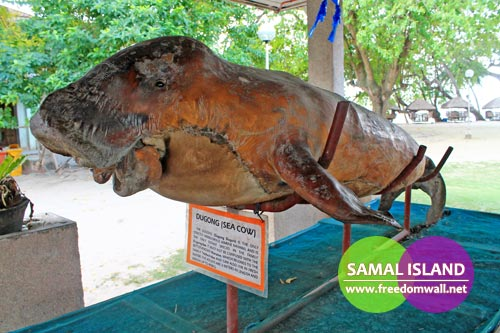 A preserved sea cow displayed at Kaputian Beach Resort, Samal Island