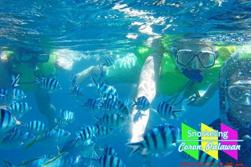 Snorkeling in Coron, Palawan
