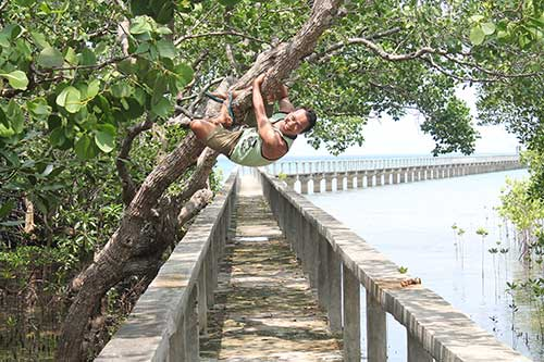 Ian Limpangog at Talabong Mangrove Forest and Bird Sanctuary, Bais City