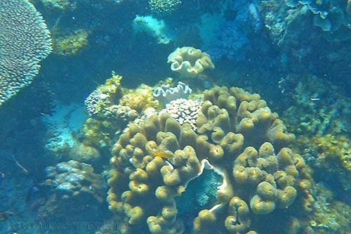 Moalboal Travel Guide: Home of Cebu's Famed Underwater