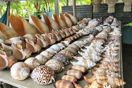 Ornamental sea shells on-sale at Bantayan