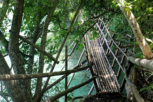 The make-shift bamboo bridge