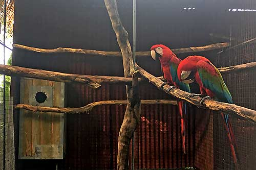 Punta Ballo Parrot farm takes care of these two colorful parrots