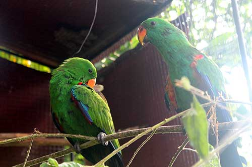 Punta Ballo Parrot Farm's love birds