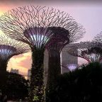 Singapore Supertree Gove