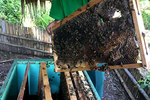 Sumilon Bee Farm