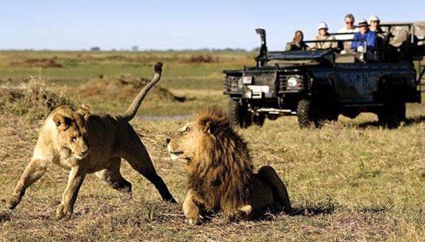 African wild life safari