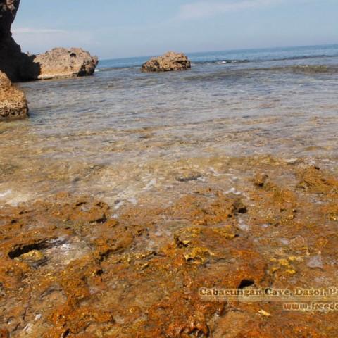 cabacungan cove shoreline