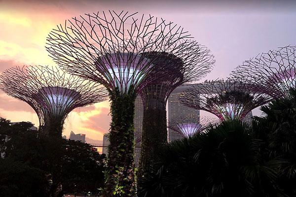 Singapore Supertree Gove